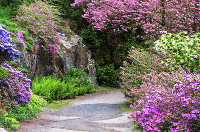 Photograph - Walk In Spring Eden. Pink Blooms by Jenny Rainbow