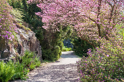 Photograph - Walk In Spring Eden. Pink Blossom Of Dogwood Tree by Jenny Rainbow