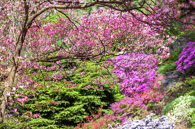 Photograph - Walk In Spring Eden. Pink Branch by Jenny Rainbow
