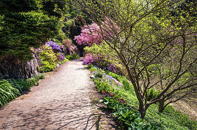 Photograph - Walk In Spring Eden. Transparent Greenery by Jenny Rainbow