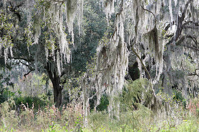 Photograph - Walk On Florida's Wild Side by Carol Groenen