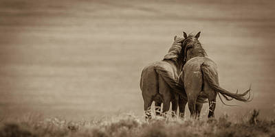 Photograph - Walk With Me Awhile by Mary Hone