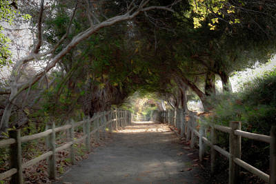 Photograph - Walking Trail by Alison Frank