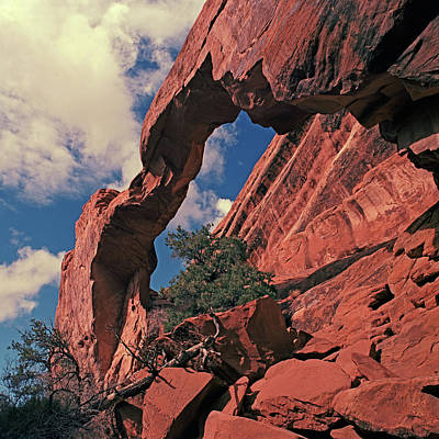 Photograph - Wall Arch by Tom Daniel