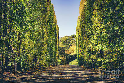 Photograph - Walls Of Green Trees In A Fall Season. by Michal Bednarek