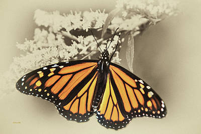 Mixed Media - Wandering Migrant Monarch Butterfly by Christina Rollo