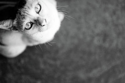 Photograph - Wanting Cat by Christopher Li