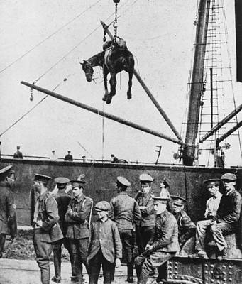 Photograph - War Horse Arrives In France by Hulton Archive