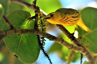 Photograph - Warbler's Delight by Climate Change VI - Sales
