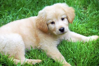 Photograph - Warm Fuzzy Puppy by Christina Rollo