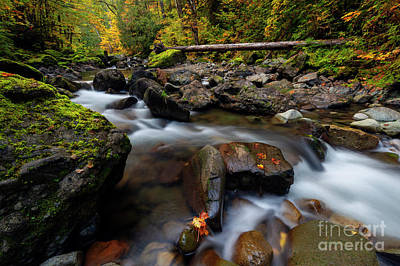 Photograph - Washington Cascade Autumn by Mike Dawson