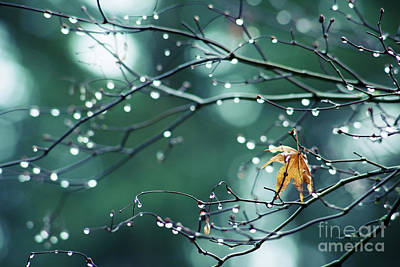 Photograph - Water Droplets On Twigs Vii by Charmian Vistaunet