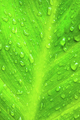 Royalty-Free and Rights-Managed Images - Water Drops on Green Leaf by Brian Knott Photography