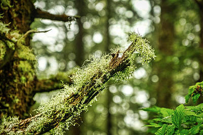 Photograph - Water Drops On Moss by Stuart Litoff