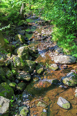 Photograph - Water In A Forest In Vogelsberg by Sun Travels