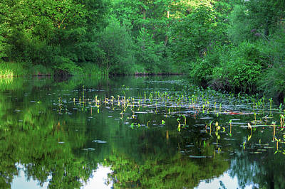 Photograph - Water Lilies In The Spreewald by Sun Travels