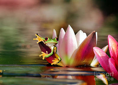 Water Lily And Frog Art Print