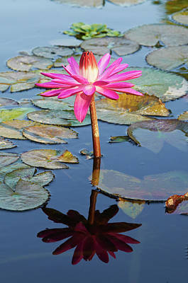 Photograph - Water Lily by Garden Gate magazine