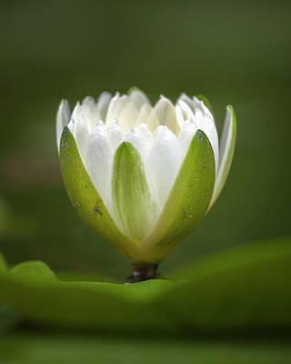 Photograph - Water Lily Jardin Botanico Del Quindio Calarca Colombia by Adam Rainoff