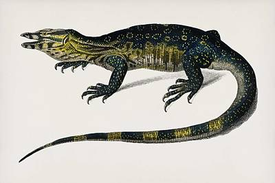 Painting - Water Monitor  Varanus  Illustrated By Charles Dessalines D Orbigny  1806 1876  by Celestial Images