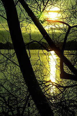 Photograph - Water Through The Trees Green by Scott Lyons