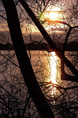 Photograph - Water Through The Trees Red by Scott Lyons