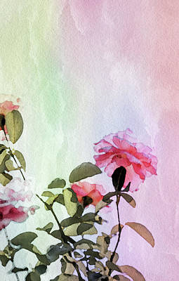 Mixed Media - Watercolor Rose by Susan Maxwell Schmidt