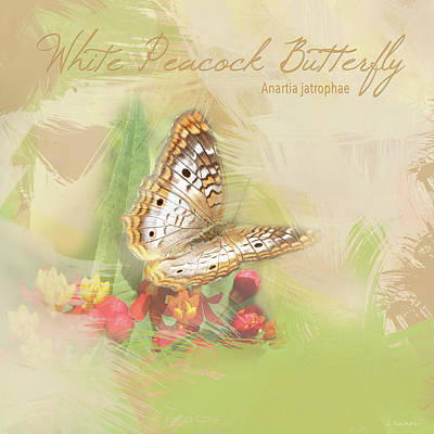 Photograph - Watercolor White Peacock Butterfly by Heidi Hermes