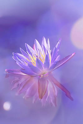 Photograph - Waterlily Dreams by Kay Brewer