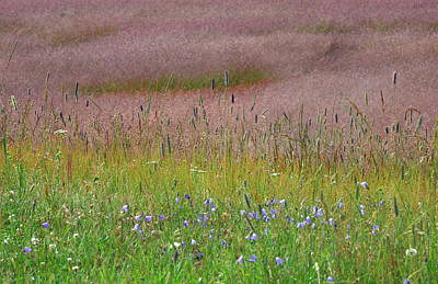 Photograph - Waves Of Grasses And Flowers In Yellowstone by Bruce Gourley