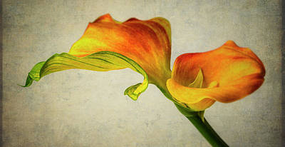 Photograph - Wavy Leaf And Calla Lily by Garry Gay