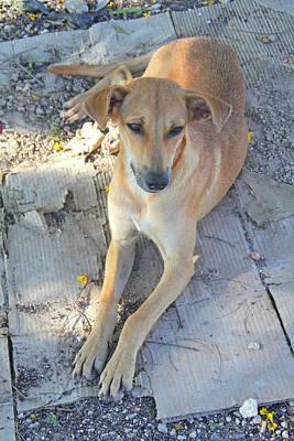 Photograph - Wayside Dog by Nareeta Martin