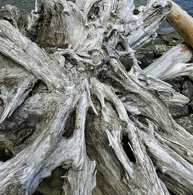 Photograph - Weathered Driftwood by Mark Duehmig