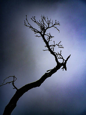 Photograph - Weathered Tree Branch Silhouette Bodmin Moor by Richard Brookes