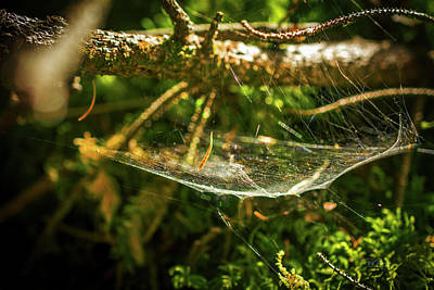 Photograph - Web Basket by Bill Posner