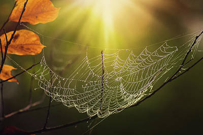 Photograph - Web In Light by Jessica Nelson