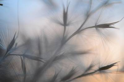 Photograph - Weed Abstract 3 by Marianna Mills