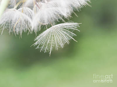 Photograph - Weed Or Wish by Maria Trujillo