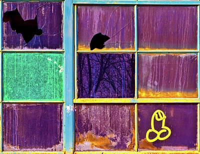 Photograph - Weenie On A Window by Robert FERD Frank