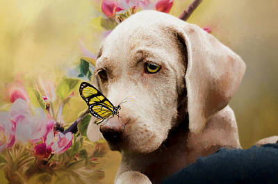 Painting - Weimaraner Puppy With Butterfly - Painting by Ericamaxine Price
