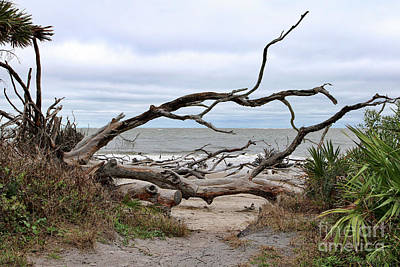 Photograph - Welcome To Driftwood Beach by Carol Groenen