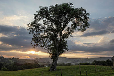 Photograph - Welsh Sunrise With Tree  by John McGraw