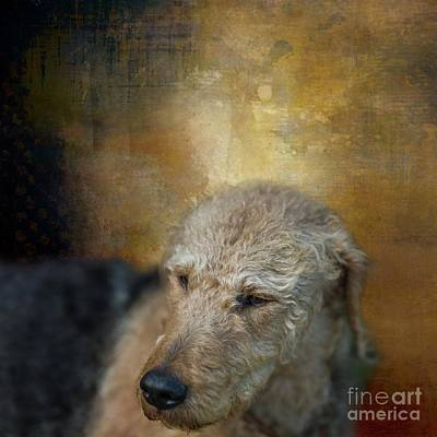 Mixed Media - Welsh Terrier by Eva Lechner