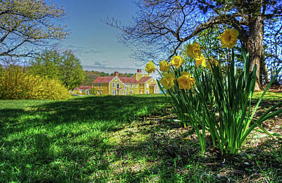 Photograph - Wentworth Daffodils by Wayne Marshall Chase
