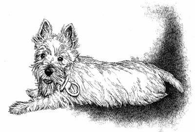 Drawing - West Highland Terrier by Patrice Clarkson