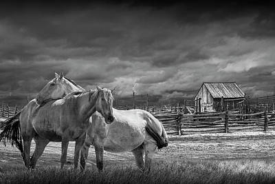 Photograph - Western Horses By A Corral In Black And White by Randall Nyhof