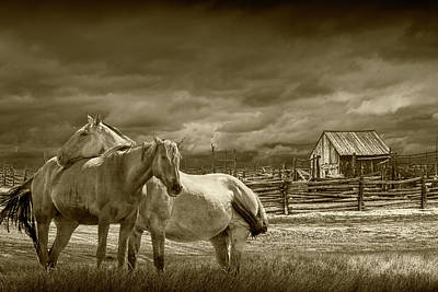 Photograph - Western Horses By A Corral In Sepia Tone by Randall Nyhof
