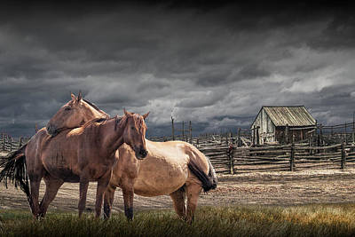 Photograph - Western Horses By A Corral by Randall Nyhof