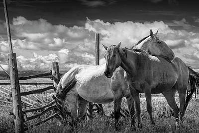 Photograph - Western Horses In The Pasture By A Wooden Fence In Black And White by Randall Nyhof