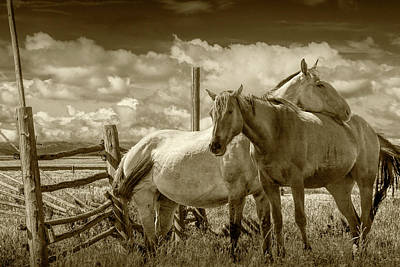 Photograph - Western Horses In The Pasture By A Wooden Fence In Sepia Tone by Randall Nyhof